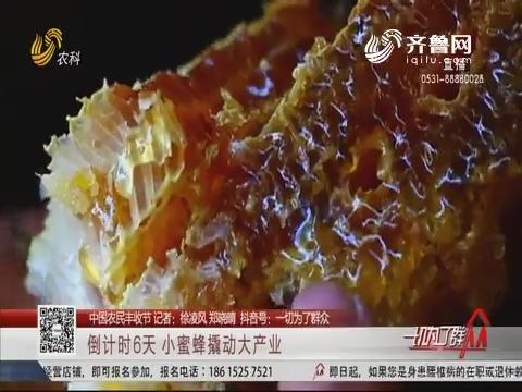 【中国农民丰收节】倒计时6天 小蜜蜂撬动大产业
