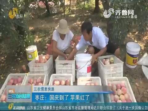 【三农信息快递】枣庄:国庆到了 苹果红了