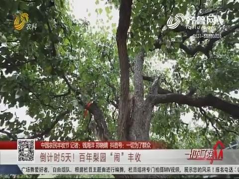 """【中国农民丰收节】倒计时5天!百年梨园""""闹""""丰收"""