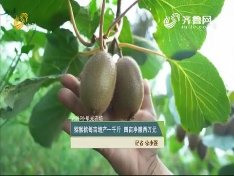 【史丹利·星光农场】猕猴桃每亩增产一千斤 四亩净赚两万元