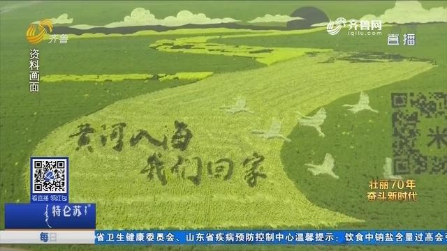 稻田守望者 政协委员周红的丰收节