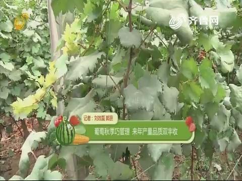 葡萄秋季巧管理 来年产量品质双丰收