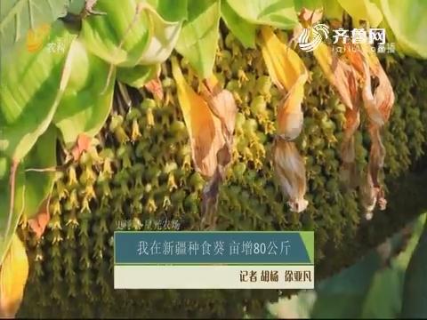 【史丹利·星光农场】我在新疆种食葵 亩增80公斤