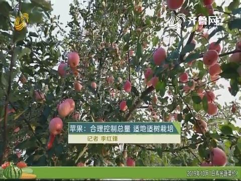 苹果:合理控制总量 适地适树栽培