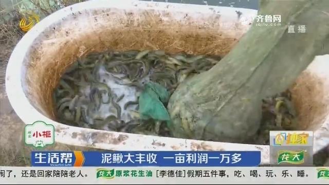 【独家】德州:泥鳅大丰收 一亩利润一万多