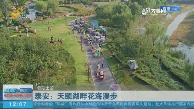 【假期出游】泰安:天颐湖畔花海漫步