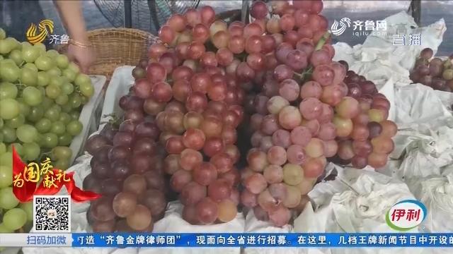 """济宁:""""最好吃的葡萄"""" 扎根刘村葡萄产业园"""
