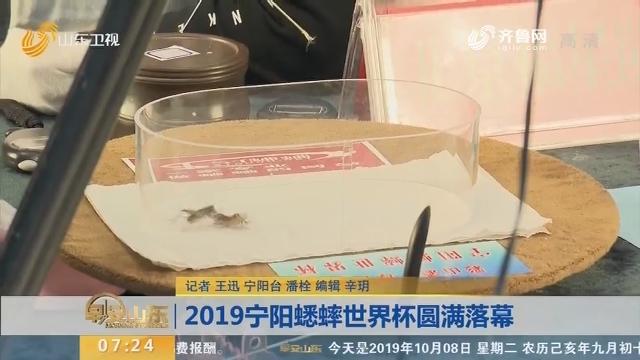2019宁阳蟋蟀世界杯圆满落幕