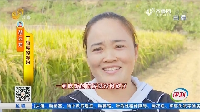 平阴:媳妇想吃大米 老公为她种了几百亩