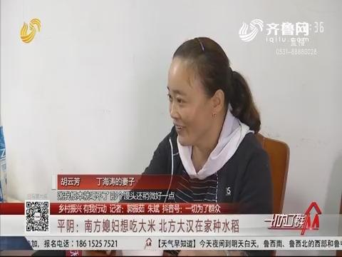 【乡村振兴 有我行动】平阴:南方媳妇想吃大米 北方大汉在家种水稻