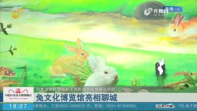 兔文化博览馆亮相聊城