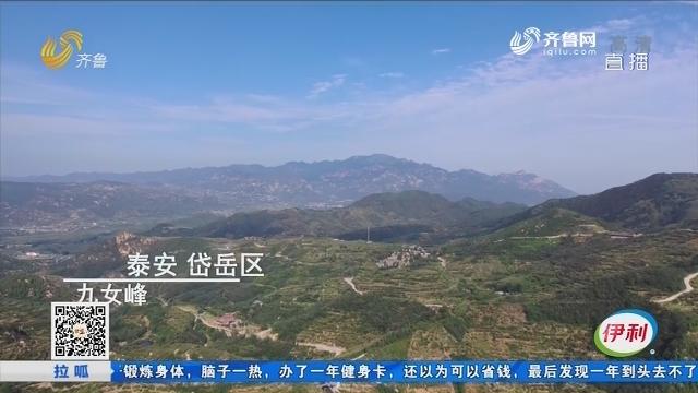 【最美乡村】泰安岱岳区网红村