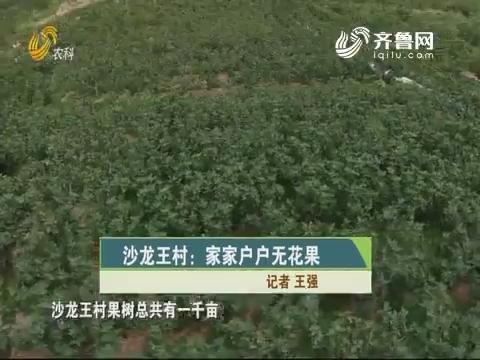 沙龙王村:家家户户无花果