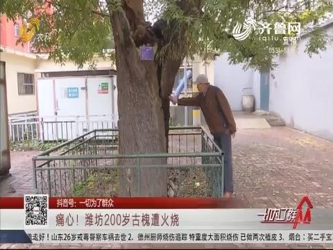 痛心!潍坊200岁古槐遭火烧