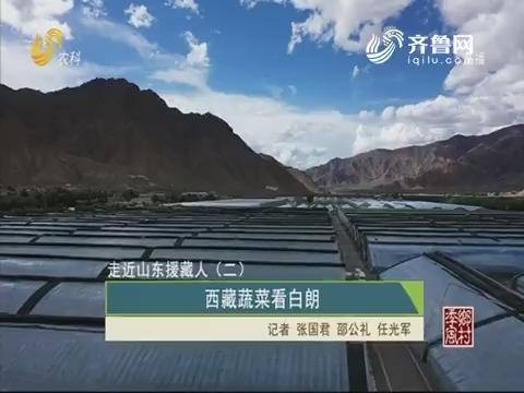 【走进山东援藏人(二)】西藏蔬菜看白朗