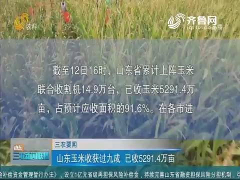 【三农要闻】山东玉米收获过九成 已收5291.4万亩