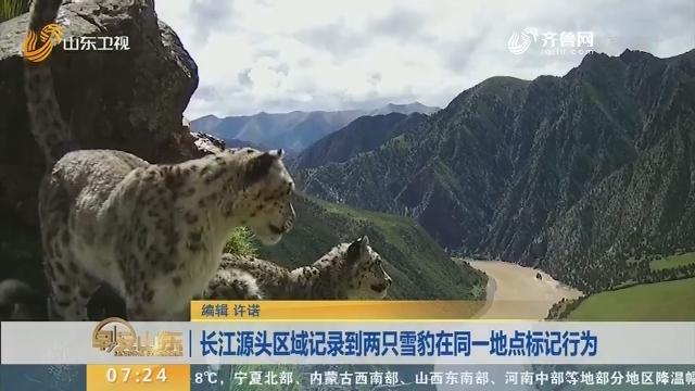 长江源头区域记录到两只雪豹在同一地点标记行为