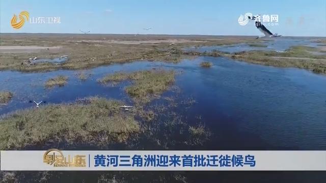 开放结尾:黄河三角洲迎来首批迁徙候鸟