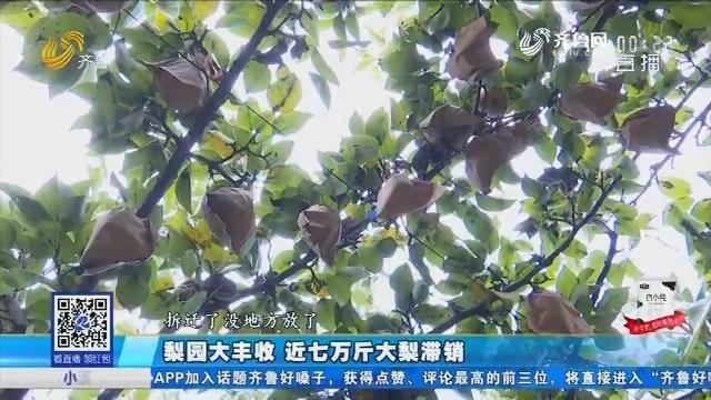 德州:梨园大丰收 近七万斤大梨滞销