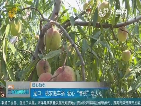 """【暖心助农】龙口:桃农遇车祸 爱心""""售桃""""暖人心"""
