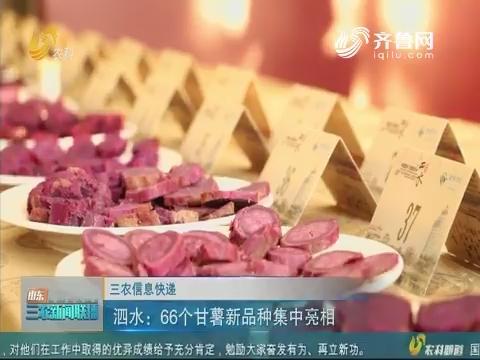 【三农信息快递】泗水:66个甘薯新品种集中亮相