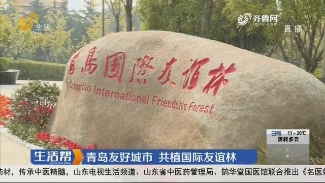 青岛友好城市 共植国际友谊林
