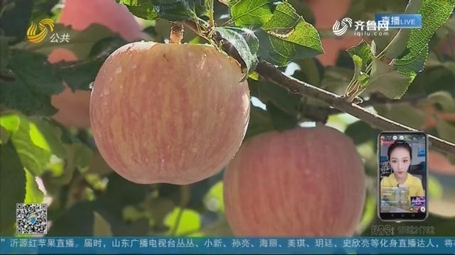 """""""苹果熟了""""沂源红苹果直播将于10月19日举行"""