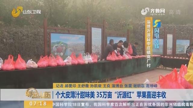 """【闪电连线】个大皮薄汁甜味美 35万亩""""沂源红""""苹果喜迎丰收"""