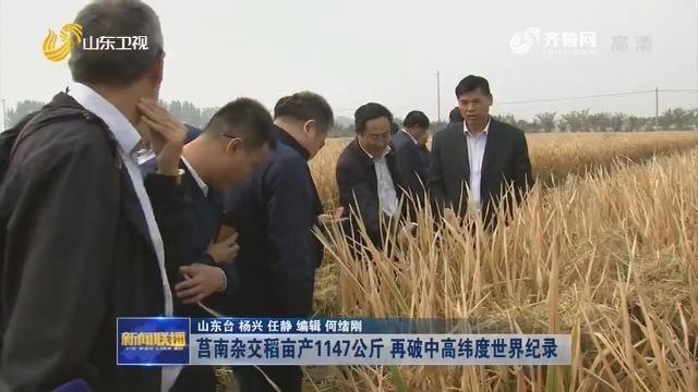 莒南杂交稻亩产1147公斤 再破中高纬度世界纪录