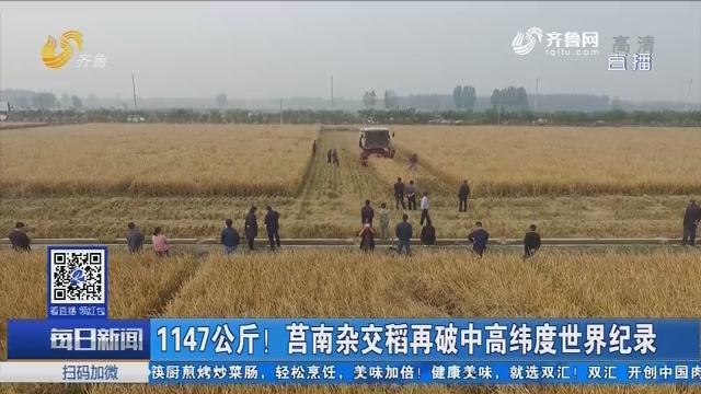 1147公斤!莒南杂交稻再破中高纬度世界纪录