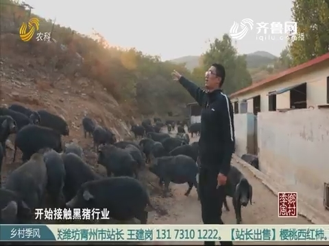 王克堅:我在山里當豬倌