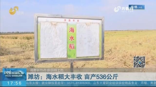【消费新热点·新品将上市】潍坊:海水稻大丰收 亩产536公斤