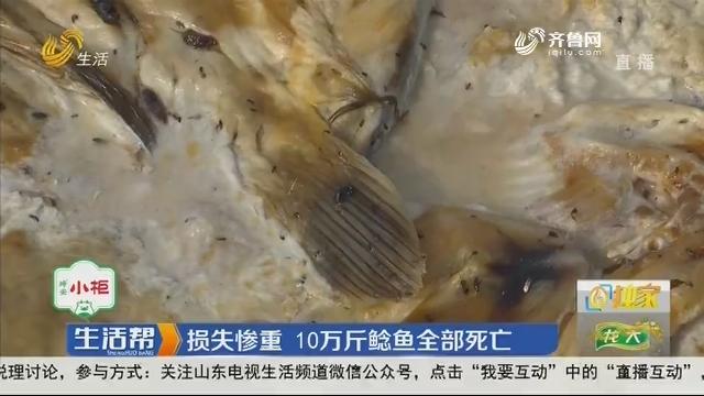 【独家】潍坊:损失惨重 10万斤鲶鱼全部死亡