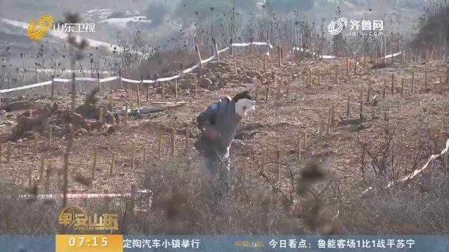 【闪电新闻排行榜】黎以边境雷场步步惊心 中国年轻扫雷作业手与死神较量