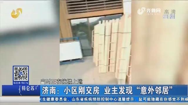"""济南:小区刚交房 业主发现""""意外邻居"""""""