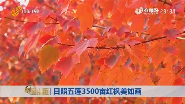日照五莲3500亩红枫美如画