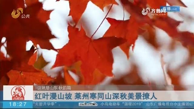 【这就是山东·秋韵篇】红叶漫山坡 莱州寒同山深秋美景撩人