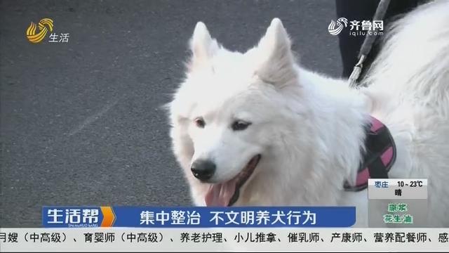 济南:集中整治 不文明养犬行为