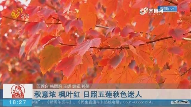 【这就是山东·秋韵篇】秋意浓 枫叶红 日照五莲秋色迷人