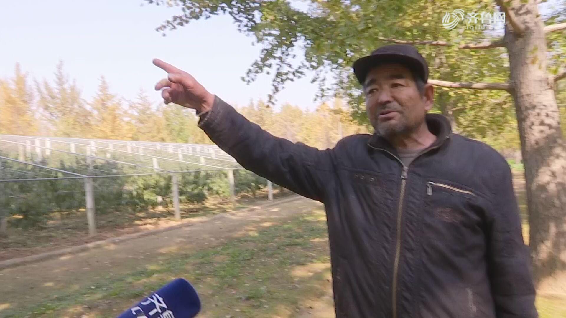 郯城:种植银杏 村民腰包鼓起来了