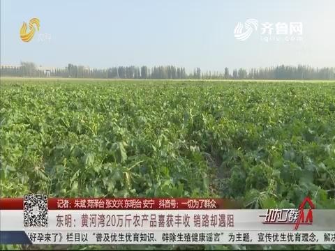 东明:黄河湾20万斤农产品喜获丰收 销路却遇阻