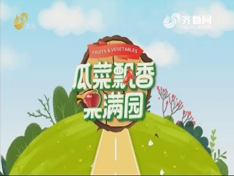 2019年11月06日《亲土种植·瓜菜飘香果满园》完整版