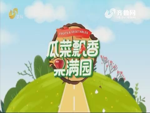 2019年11月07日《亲土种植·瓜菜飘香果满园》完整版