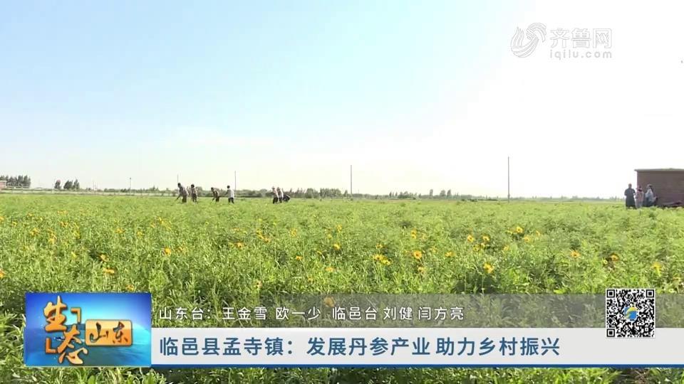 临邑县孟寺镇:发展丹参产业 助力乡村振兴
