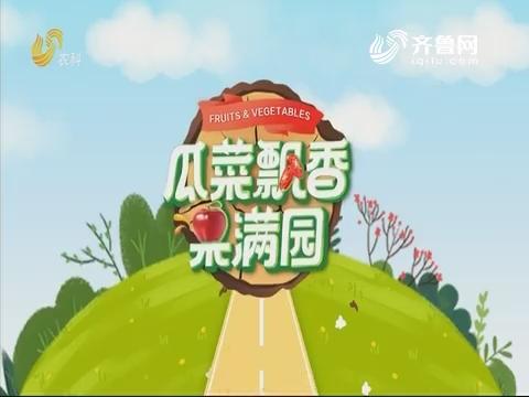 2019年11月08日《亲土种植·瓜菜飘香果满园》完整版