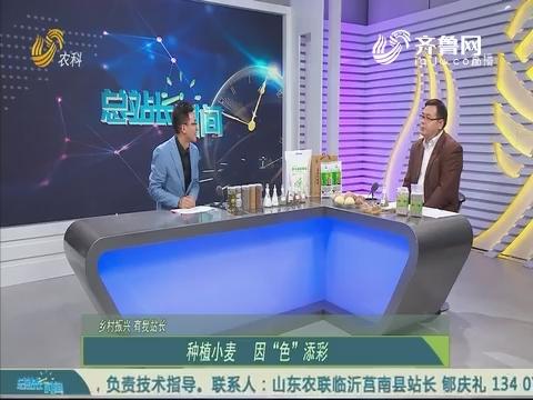 20191110《总站长时间》:乡村振兴 有我站长——刘国华 王付友