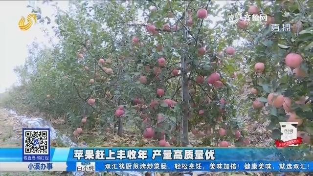莱州:九十亩地苹果 销路不畅至今无人收购