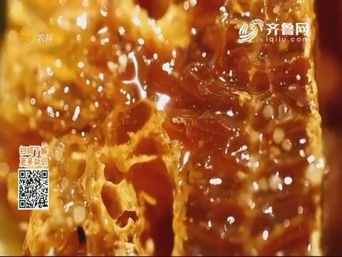 20191111《中国原产递》:土蜂蜜