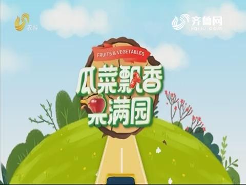 2019年11月11日《亲土种植·瓜菜飘香果满园》完整版