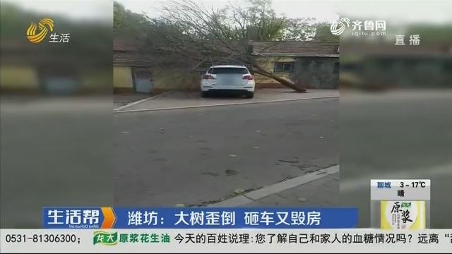 潍坊:大树歪倒 砸车又毁房